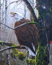 Animals - Edge of the Mist - Bald Eagles