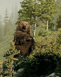 Animals - Tall Timber - Grizzly Bear