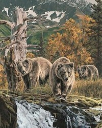 Animals - Red Alert - Grizzly Bear Family