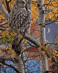 Animal - Shades of Grey - Great Grey Owl