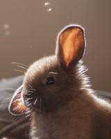 Cute Bunny Funny Face wallpaper 1