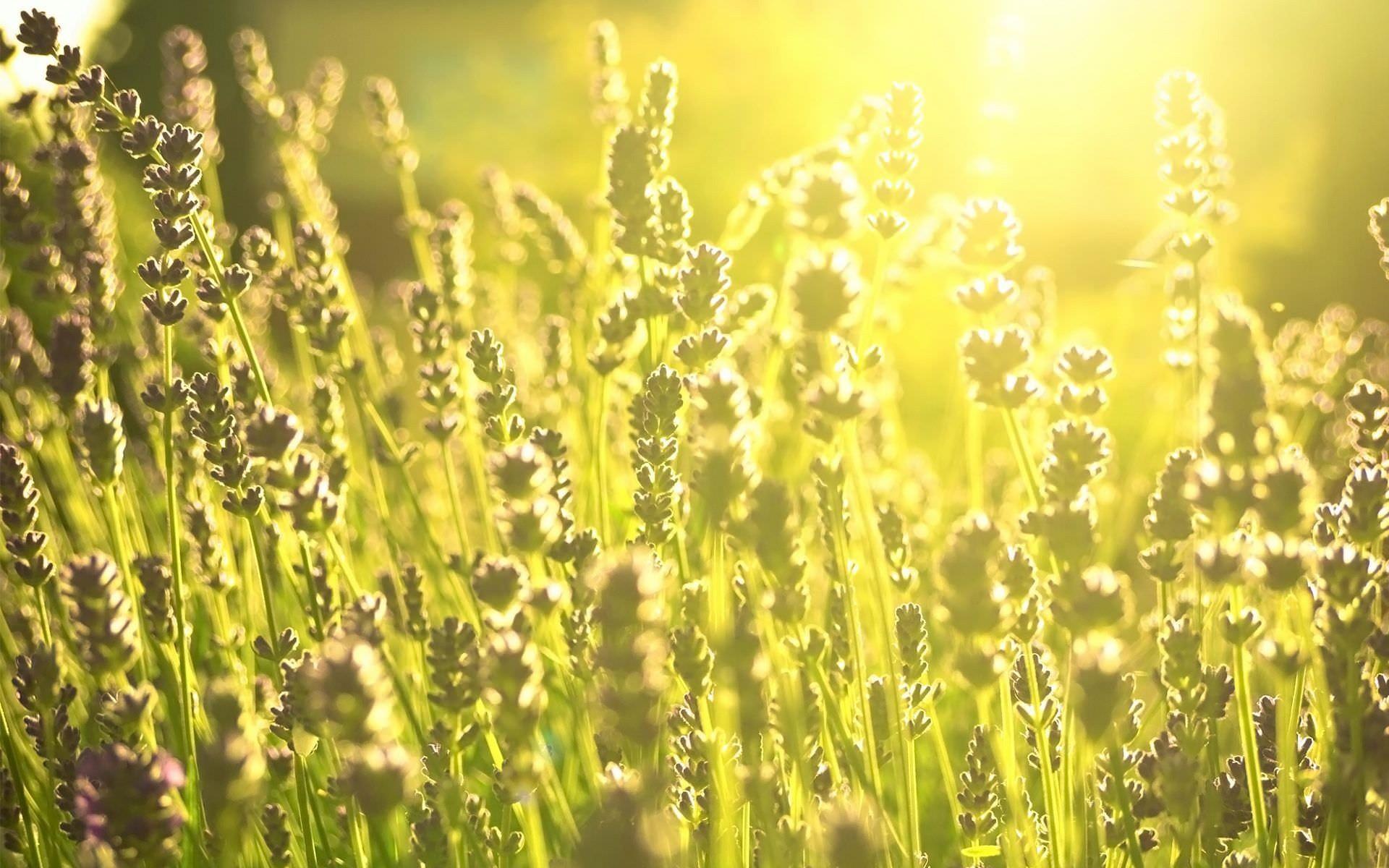 Free Daylight Green Fields phone wallpaper by suziq13036