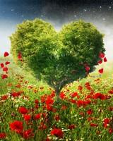Green Love Heart Tree Poppies