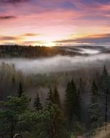 Foggy Sunrise National Park