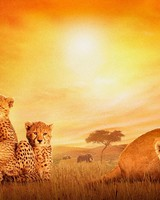 African Cats wallpaper 1