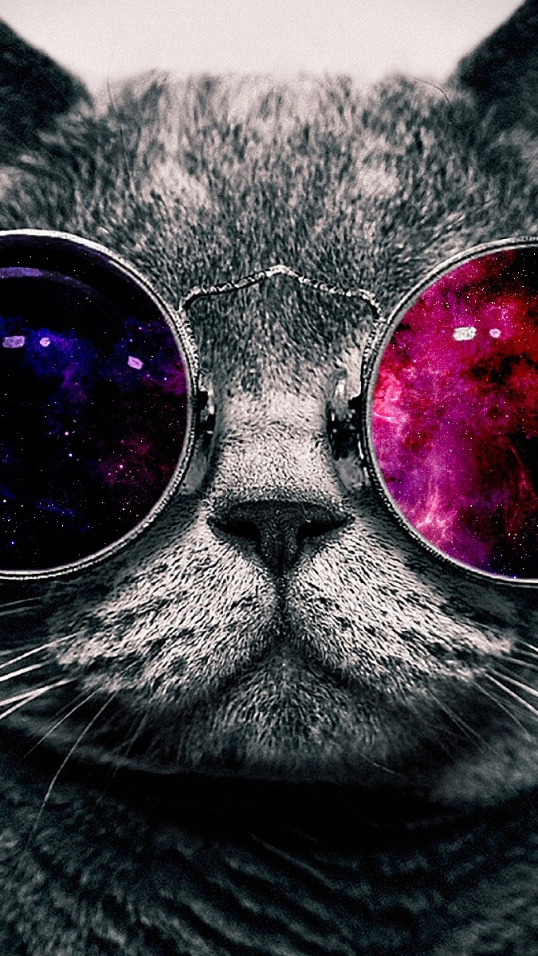 Free Cat With Glasses phone wallpaper by miadolfan