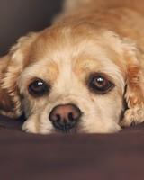 Sad Eyes Dog