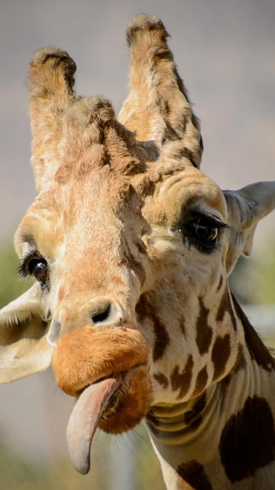 Free Funny Giraffe phone wallpaper by mboy06