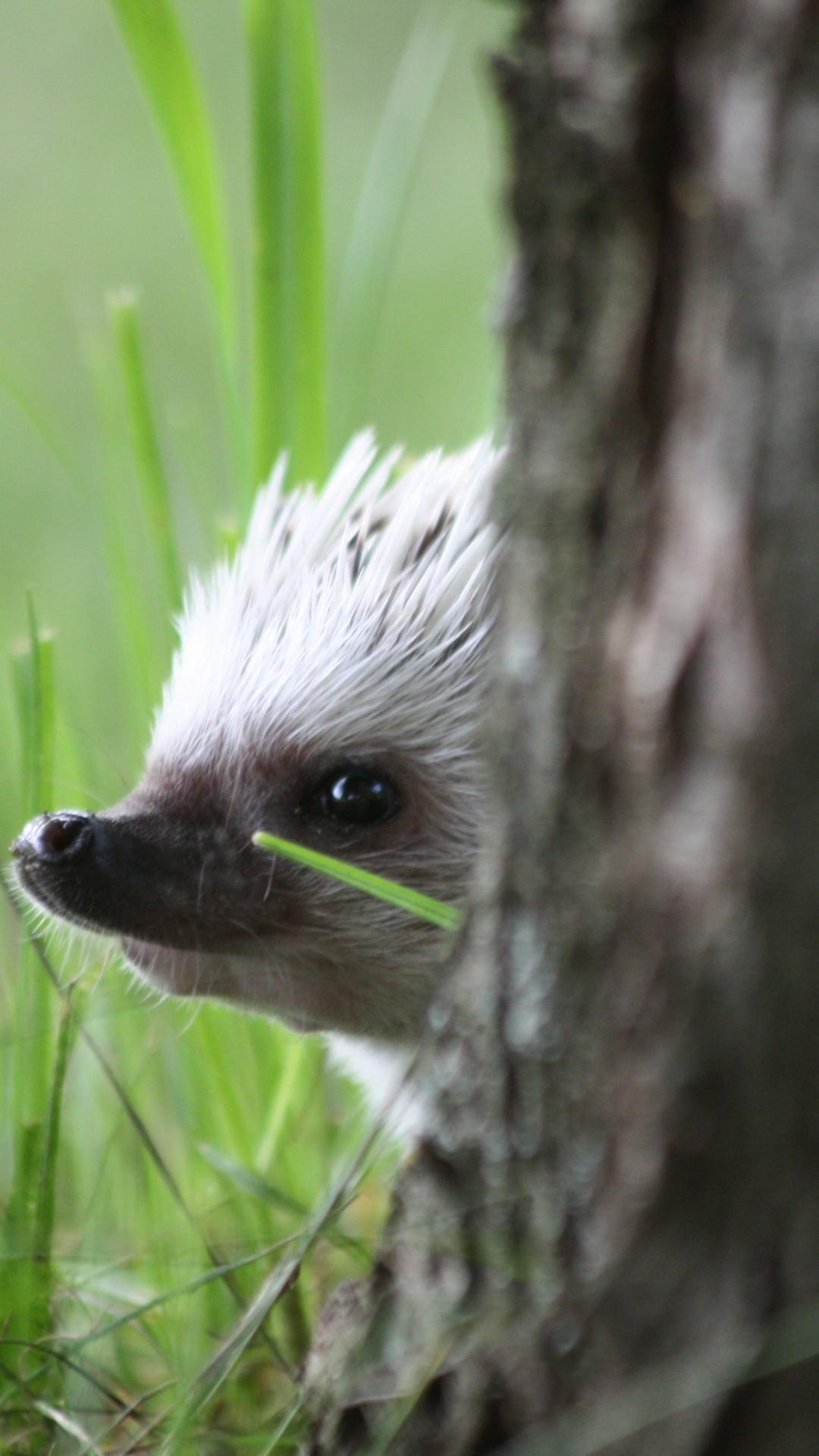 Free Hedgehog peep out phone wallpaper by brttny2hrnr