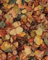 Something Leaves