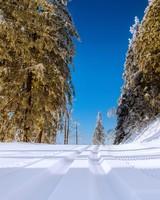 Winter Snowy Road Scenery