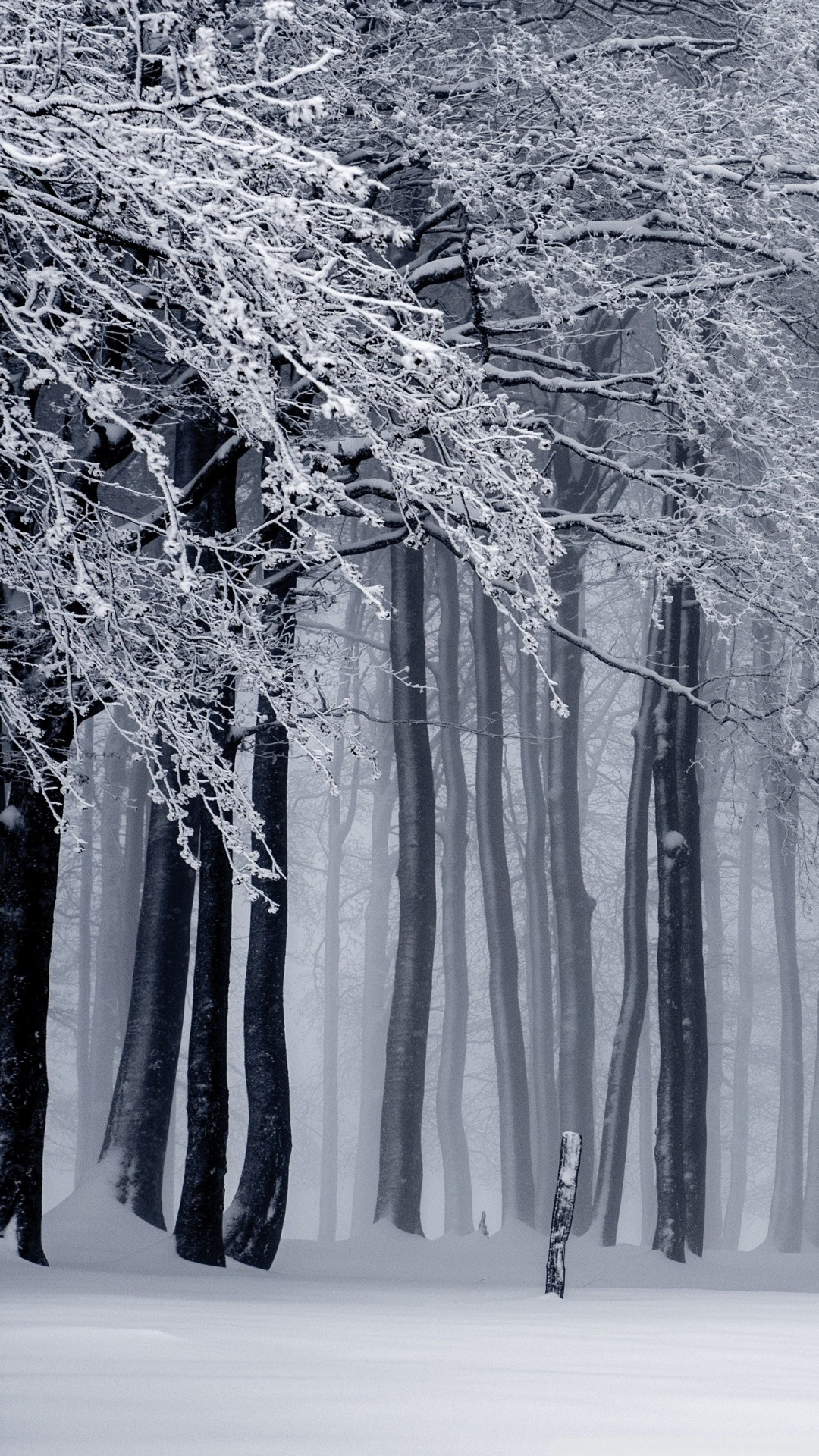 Free Snowy Forest, Winter phone wallpaper by dreshonwilliams