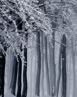 Snowy Forest, Winter wallpaper 1