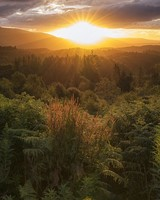 Forest, Scotland