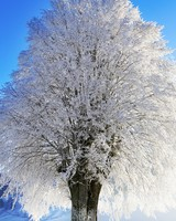 Idyllic Landscape, Winter