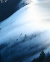 Fog Wave