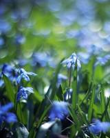 Flowers, Meadow