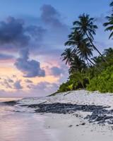 Beach, Palms, Sand, Ocean