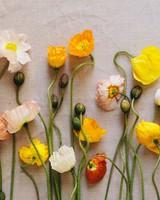 Poppies herbarium