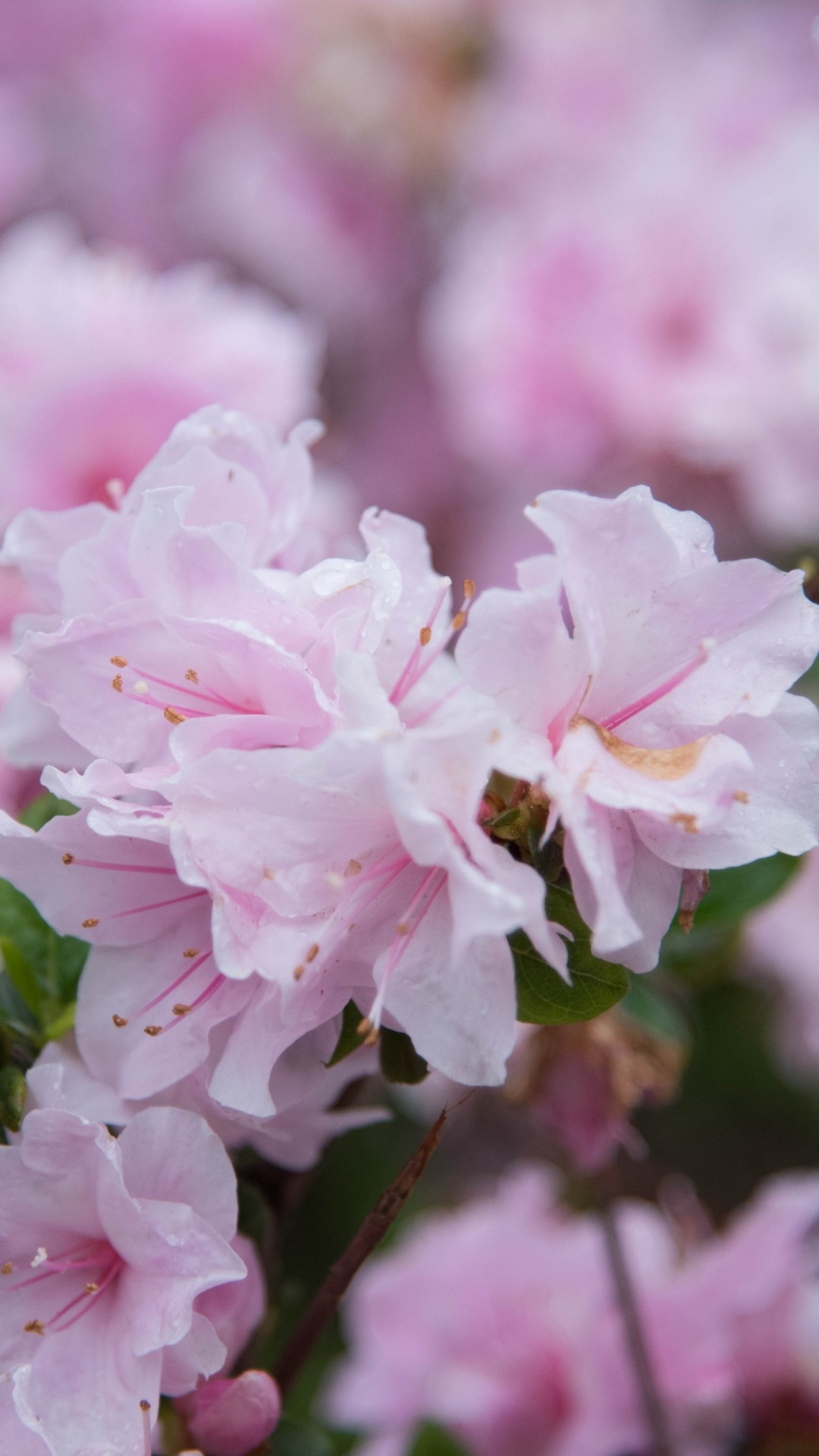 Free Spring Flowers phone wallpaper by miamorris01