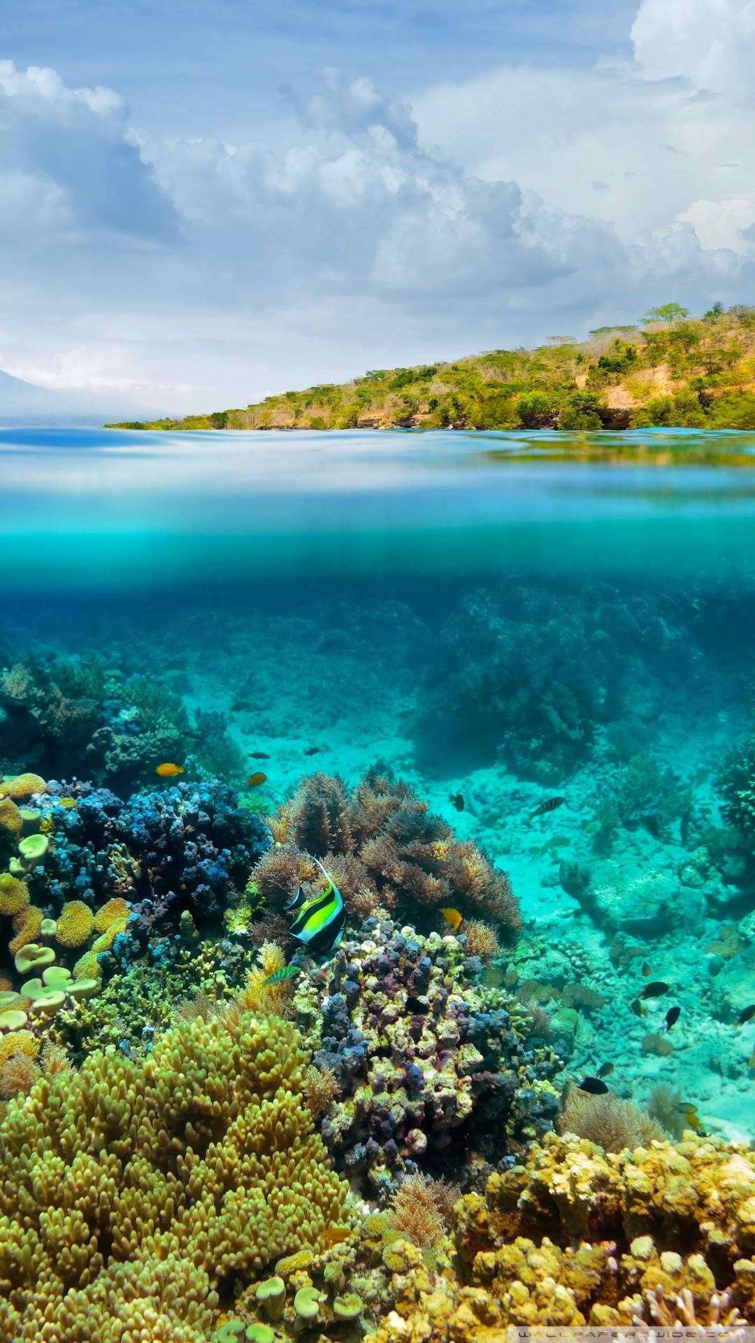 Free Half Underwater Half Above Water phone wallpaper by evanfreymann