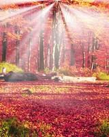 Forest Glade, Autumn