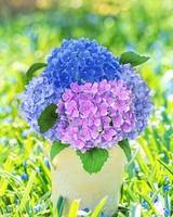 Spring Hydrangea Bouquet in a Vase