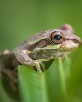 Tree Frog Habitat