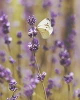 Butterfly, Flowers, Field