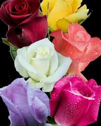 roses22.jpg