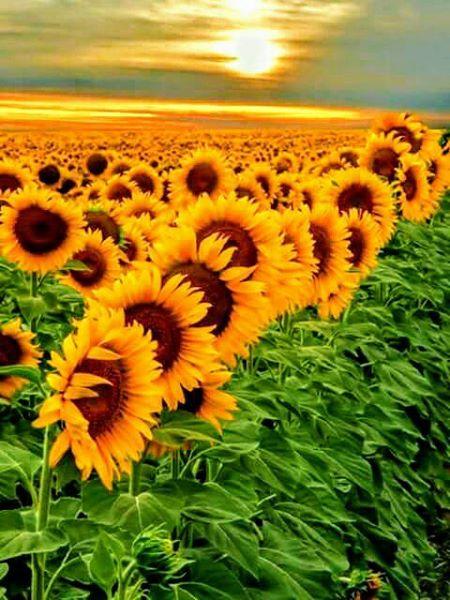 Free SUN.jpg phone wallpaper by tribeca