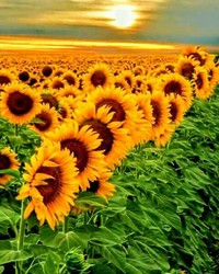 SUN.jpg