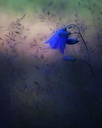 BLUE MAGIC.jpg