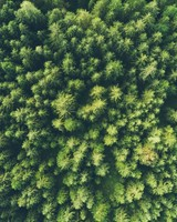 Trees top view