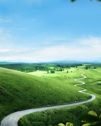 Green Nature wallpaper 1