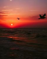 Sea, Sunset, Birds