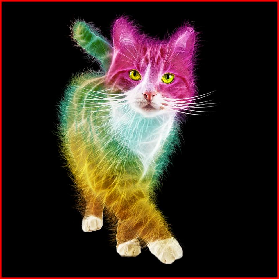 Free kitty.jpg phone wallpaper by tribeca