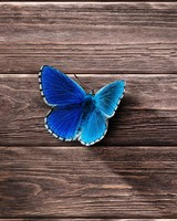 Blue butterfly on the wooden surface