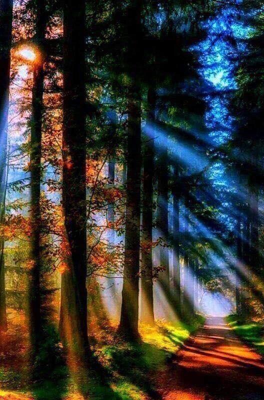 Free TREELUV.jpg phone wallpaper by tribeca