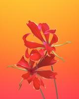 Gloriosa Flower