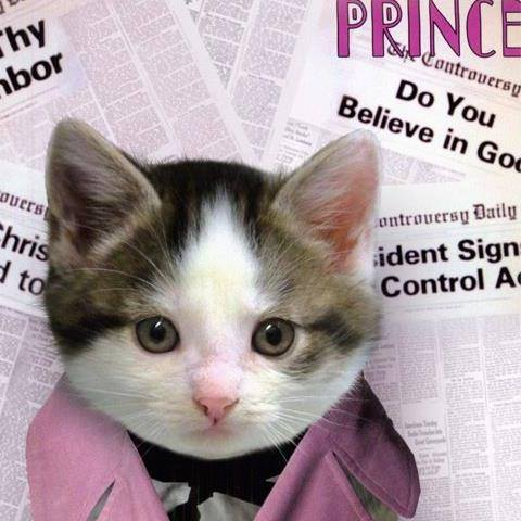 Free PRINCECAT.jpg phone wallpaper by tribeca