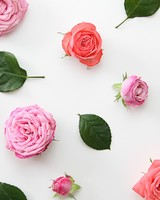 Pink Roses Flowers Design