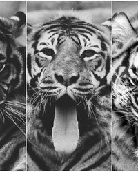 CAT LOVE.jpg