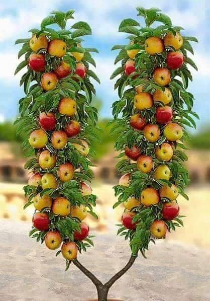 Free appleluv.jpg phone wallpaper by tribeca