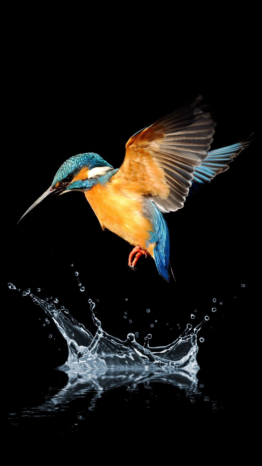 Free Blue tailed hummingbird phone wallpaper by treymoles