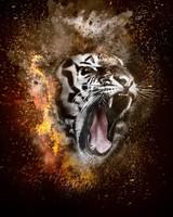 Tiger, Fire