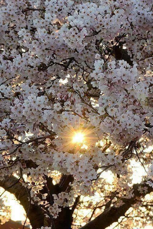 Free spring.jpg phone wallpaper by tribeca