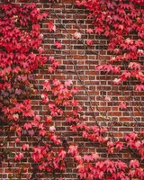 Leaves, Wall, Branches, Bricks