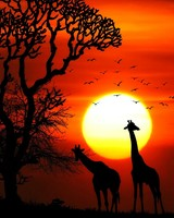 Sunset Animals
