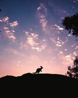 Kangaroo, Silhouette, Sky, Evening, Hill